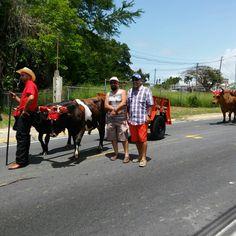 Hatillo festivale