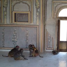meet up in an abandoned building, udaipur