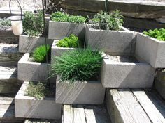 Container Garden: A Step Up for Cinder Blocks Herb Garden | jardin d'herbes aromatiques