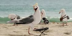 Flock of Seagulls commercial.  Hubby LOVES this!  =)