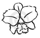 cattleya orchid drawings - Bing Images