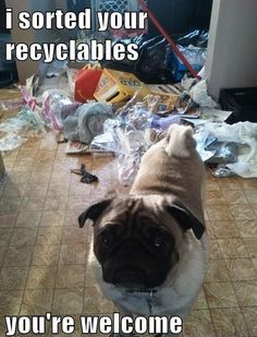 Just Sorted Your Recyclabes