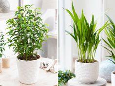 Förutom att vara dekorativa är många växter även bra för din hälsa. Vissa ökar luftfuktigheten och andra renar luften från skadliga ämnen. Här är fem växter som kan förbättra din sömn...