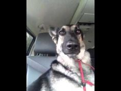 GONE VIRAL: This Dog's Dancing Ears Are Taking The Internet By Storm!
