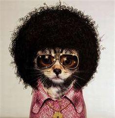 disco kittay