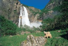 Feigumfossen. A waterfall in Luster, Norway. Photo also features a rainbow and some sheep.