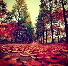 Autumn, fall, open road, road less traveled, beauty, nature, leaves, color unity