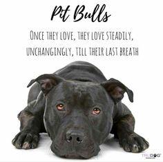 #betheirvoice #endbsl #pitbulllove #bulllove