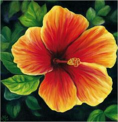 Oil Paintings of Tropical Flowers by Anna Keay Fine Art Maui Hawaii hibiscus (Cool Paintings) Nature Paintings, Cool Paintings, Watercolor Paintings, Flower Paintings, Painting Flowers, Painting Art, Hawaii Painting, Tropical Art, Tropical Flowers