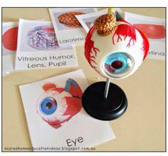 #occhio #humanbodyunit