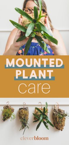 Mounted plants are everywhere! They're a fun way to display epiphytic plants like Hoyas, Bromeliads, Ferns, Staghorn Fern, Cool Plants, Plant Care, Plant Decor, Ferns, Houseplants, Clever, Bloom, Display