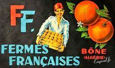 Oranges de Bône Algérie