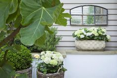 Leopoldina Haynes has used some very simple but lovely decorative touches - Here a lovely vignette