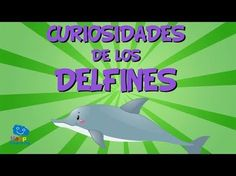 Curiosidades de los Delfines | Videos Educativos para Niños. - YouTube Dolphin Facts, Animal Classification, Sea And Ocean, Educational Videos, Animal Crafts, Dolphins, Mammals, Things That Bounce, Fun Facts