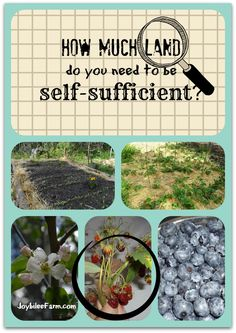 How much land do you need to be self sufficient?  Unfortunately, there's no easy answer, but this article might help you answer the question for yourself.