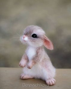 Log in - rabbit pictures . Cute Wild Animals, Baby Animals Super Cute, Baby Animals Pictures, Cute Stuffed Animals, Cute Animals Images, Cute Little Animals, Cute Animal Pictures, Cute Funny Animals, Animals Beautiful