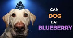 Can Dogs Eat Bananas, Apples, Strawberries, Oranges, Etc?