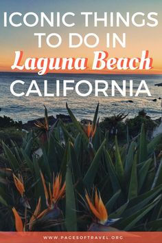 When your coastal California road trip stops in Laguna Beach, south of Los Angeles, here's what to do. Visit the beaches, art galleries, and tide pools. It would be shame to miss this relaxed, friendly city while traveling in California!