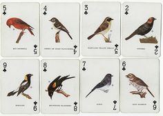 playing cards with birds