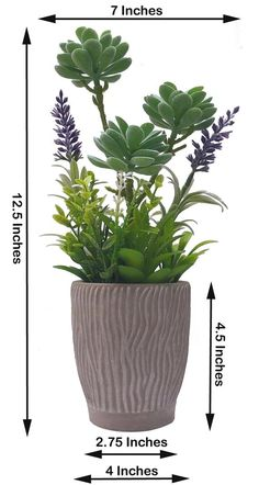 Potted Succulents Faux Plants in Cement Pots, Artificial Desert Greens with Detailed Leaves, Lifelik - Modern Design Fake Potted Plants, Potted Succulents, Real Plants, Succulent Pots, Artificial Plants, Cement Pots, Artificial Flower Arrangements, Diy Chicken Coop, Plant Care
