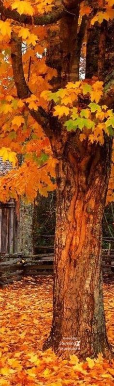 Ѽ A u t u m n. Ѽ autumn delights Ѽ  ❤ Colors of fall | A Season to dream | autumn Day