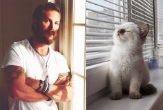 Tom Hardy and a Cat?!