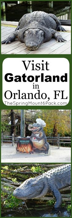 Why You Need to Visit Gatorland in Florida via @debitalks