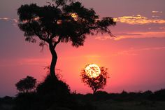 Duba Plains, Botswana