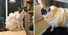 17 Pet Owners Who Regret Letting Other People Look After Their Animals