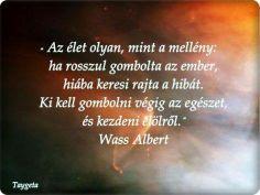 Wass Albert idézete az újrakezdésről. A kép forrása: Talján Viktória