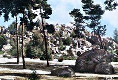 Massifs de la dame jouanne ( le maunoury ) Larchant 77