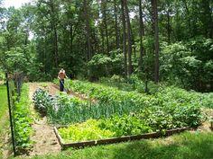 Vegyszermentes gazdálkodással nem csak a természetet óvhatjuk meg a kemikáliáktól, hanem a permetezés és a növényvédelem útján a szervezetünkbe kerülő mérgek mennyiségét is nagyban csökkenthetjük. Planting Flowers, Vineyard, Plants, Outdoor, Garden Ideas, Gardening, Outdoors, Garten, Flora