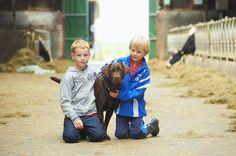 Met sinne de hond spelen in de koeien stal.