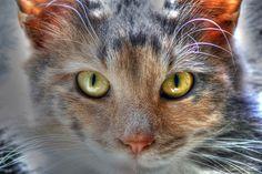 gorgeous dreamy cat