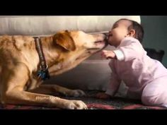 2015 Coldwell Banker TV Commercial  Home's Best Friend