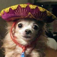 Missy wishes you a Happy Cinco de Mayo!