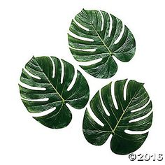 These Large Palm Leaves are perfect beach party décor! Get an authentic luau look at your next Hawaiian party or luau. Place these leaves on the party ...