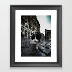 Close up portrait of a tough street cat in the city of Rome.  #cat #streetcat #animal #streetphotography #photography #gopro #wideangle #street #city #cityphotography #rome #italy #wallart #artprint #framed