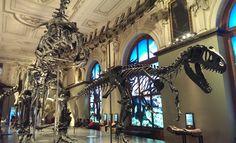 Dinosaurier Skelette im Naturhistorisches Museum in Wien.