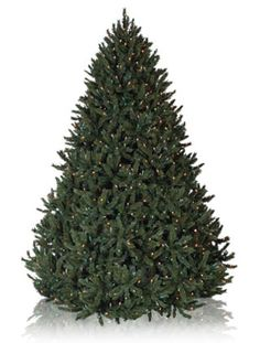 Rocky Mountain Pine Artificial Christmas Trees, Prelit Artificial Christmas Potted Tree - Balsam Hill