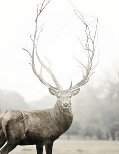 The tree deer, seems like a fairy tale character. And someone out there would kill this beautiful creature for their glory