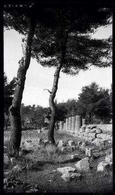 Olympia. Heraeum columns. Dorothy Burr Thompson Greece 1923