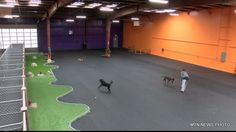 The Wagg'n Indoor Dog Park and