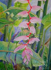 Heliconia Paintings - Sexy Pink  by Kathleen Rutten