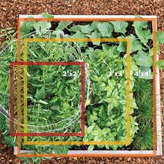 You don't need a whole lot of space to get a vegetable garden going. Here's our tiny garden plan that will have you harvesting fresh veggies in no time VIA @sunsetmag