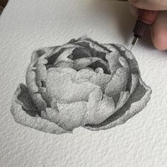 250k stippled dots for this flower. Black and White Stippling Flower Drawings. By Xavier Casalta.