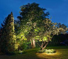 Ett träd blir ofta allra vackrast om man blandar två färgtemperaturer, till exempel vitt och varmtonat ljus från olika håll. Man kan också använda olika armaturer, där den ena ger ett bredstrålande ljus och den andra ett smalstrålande. Det får trädet att upplevas mer dynamiskt och tredimensionellt.