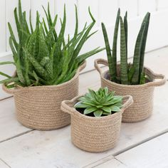 Offering a natural way to display fresh herbs, succulents and plants, the Set of 3 Woven Plant Pots are handwoven from braided Jute rope with a Indoor Plant Pots, Potted Plants, Cactus Plants, Jute, Indoor Watering Can, Deco Nature, Plant Basket, Ceramic Pots, Homemade Home Decor