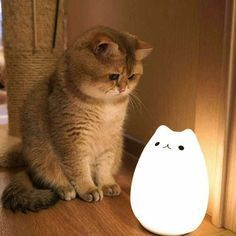 The kitty and lamp is sooooo cute together! - your daily dose of funny cats - cute kittens - pet memes - pets in clothes - kitty breeds - sweet animal pictures - perfect photos for cat moms Cute Funny Animals, Cute Baby Animals, Animals And Pets, Funny Cats, Cute Kittens, Ragdoll Kittens, Tabby Cats, Bengal Cats, Gatos Cats