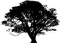 Tree Silhouette for DIY art @Ryan Wierks